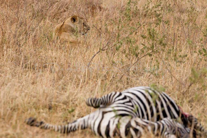 20100909_Maasi Mara_431