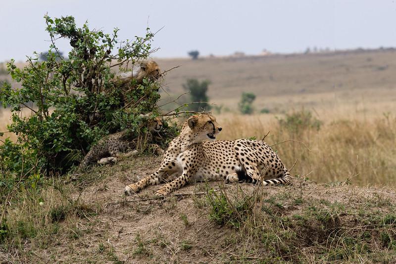 20100912_Maasi Mara_527