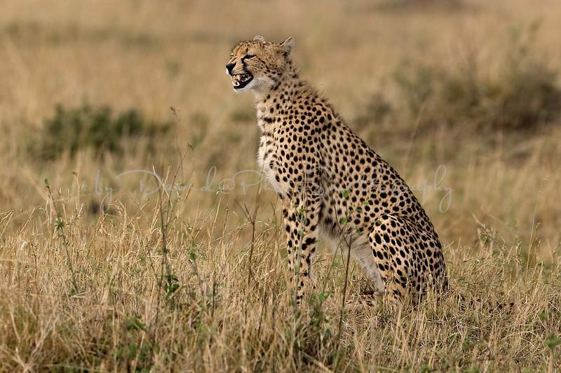 20100912_Maasi Mara_059