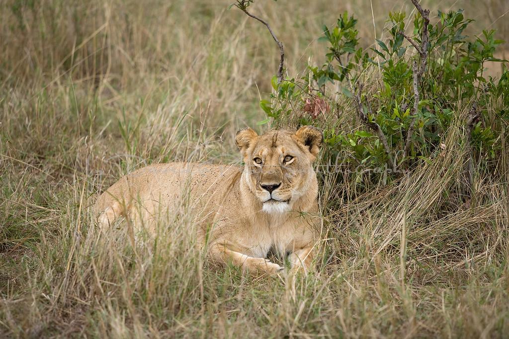 20100910_Maasi Mara_724