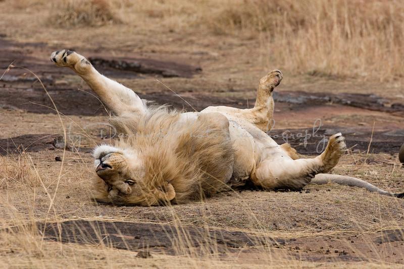 20100908_Maasi Mara_259