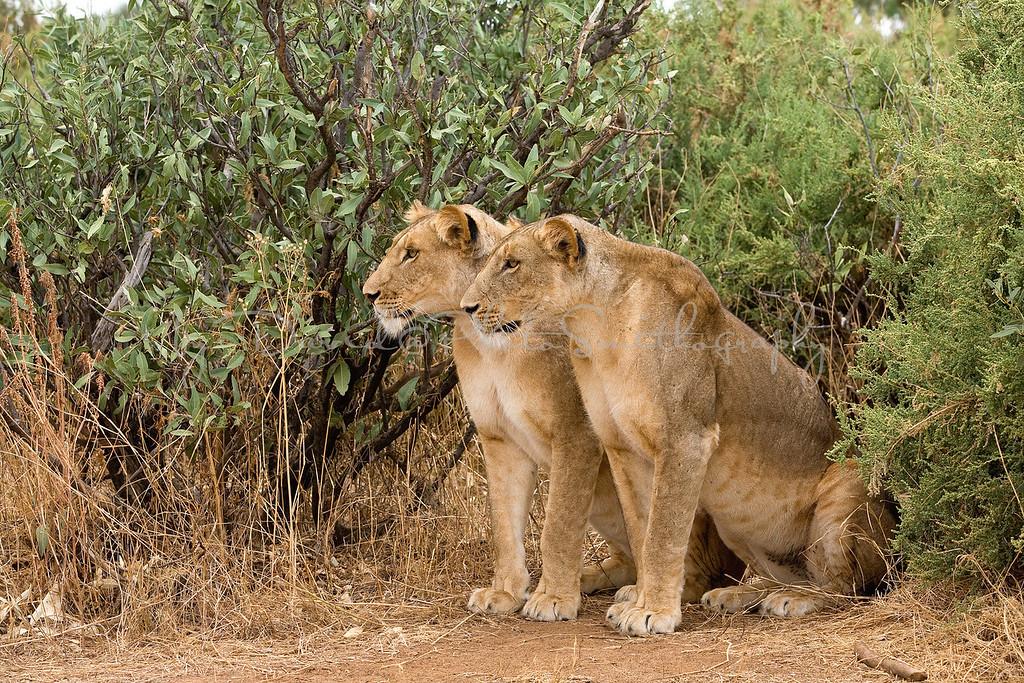 20100903_Samburu_0695
