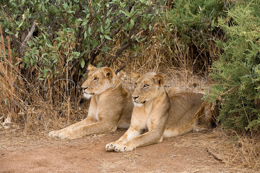 20100903_Samburu_0718