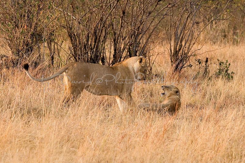 20100909_Maasi Mara_153