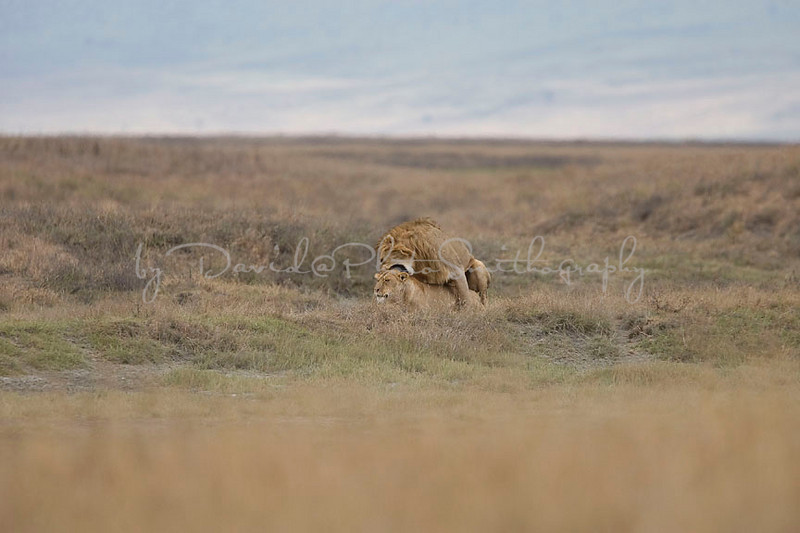 2007 07 18 Ngorongoro 303