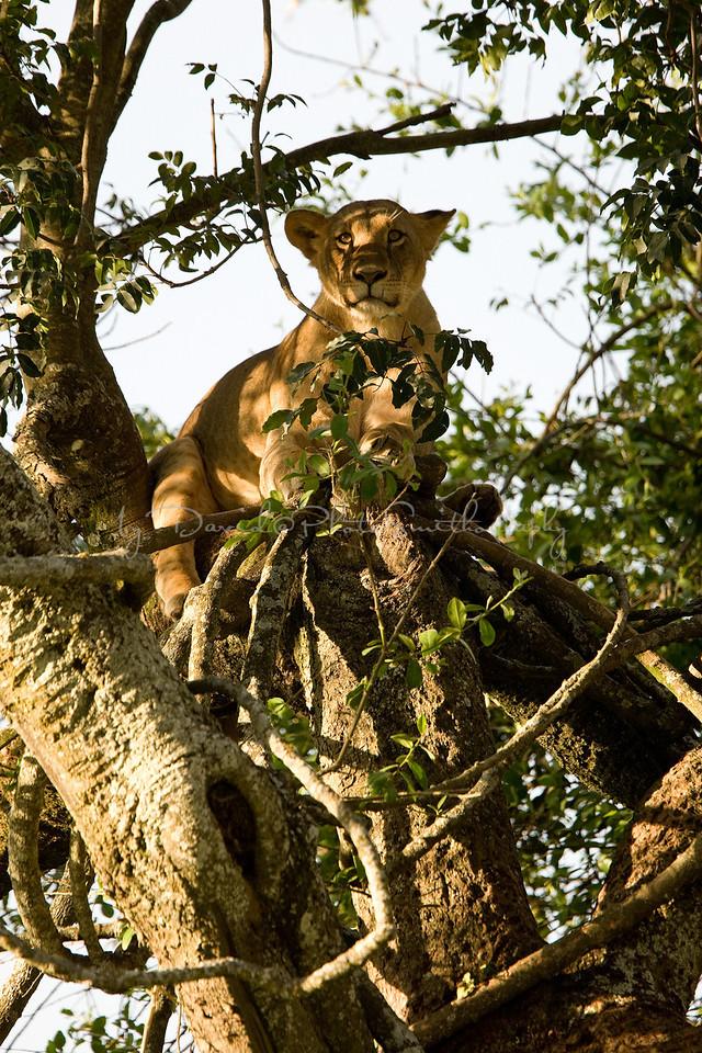 20100907_Lake Nakuru_576
