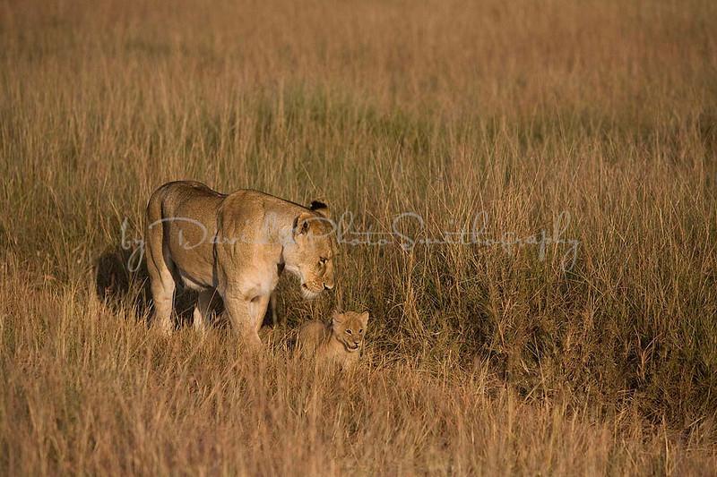 2007 07 24 Masai Mara 195
