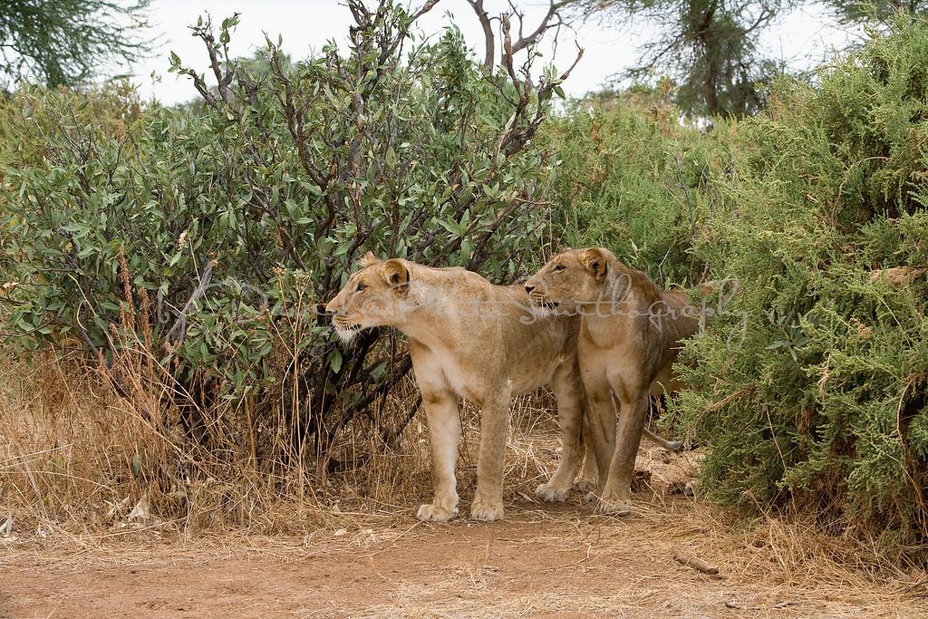 20100903_Samburu_0683