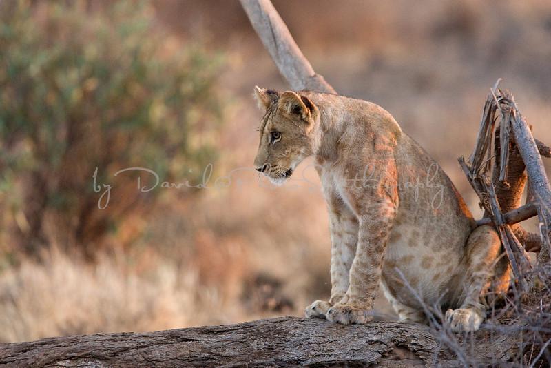 20100903_Samburu_059