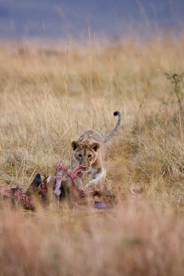 20100909_Maasi Mara_028