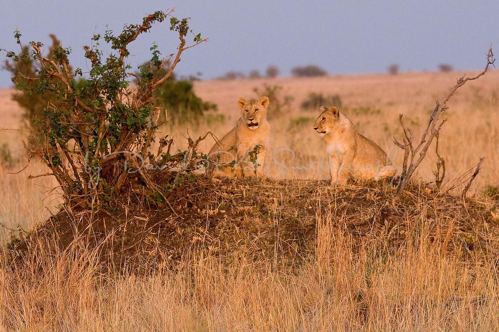 20100909_Maasi Mara_092