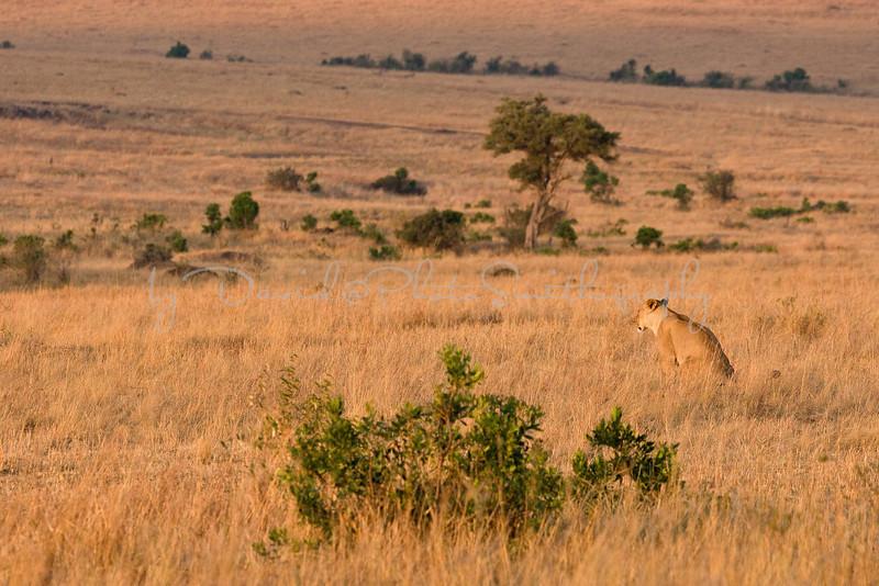 20100909_Maasi Mara_123