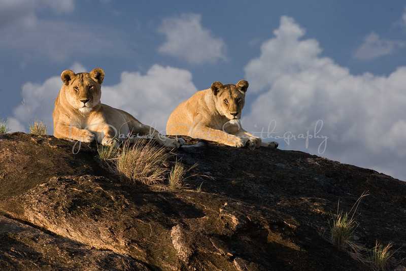 20100910_Maasi Mara_145a