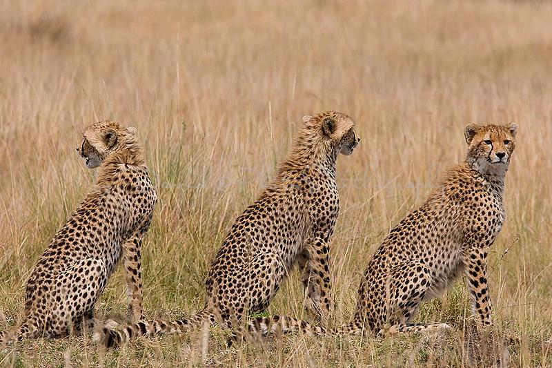 2007 07 26 Masai Mara 288