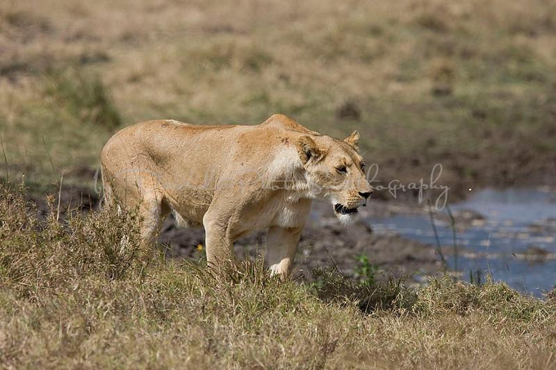2007 07 18 Ngorongoro 470