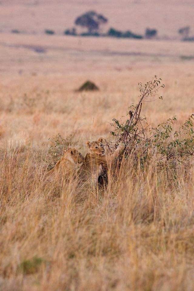 20100909_Maasi Mara_065
