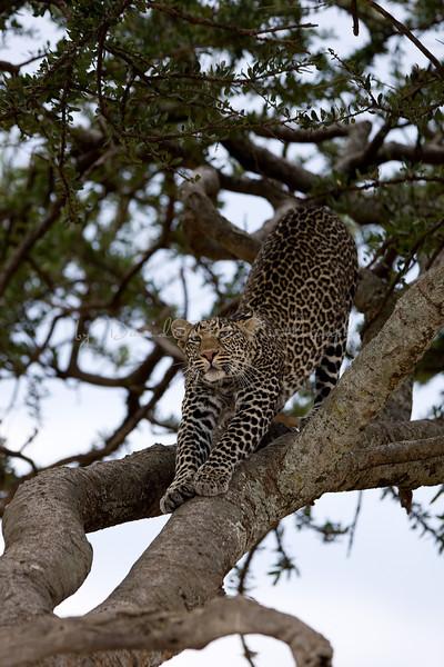 20100908_Maasi Mara_082