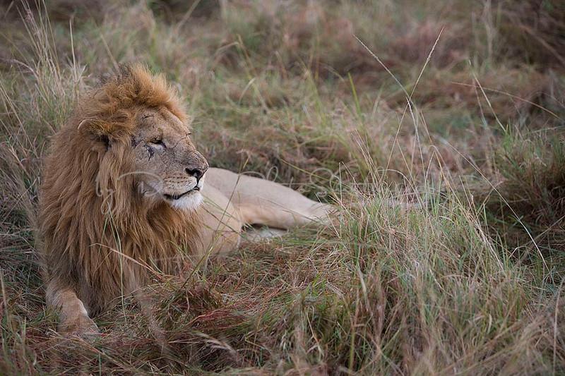 2007 07 25 Masai Mara 645