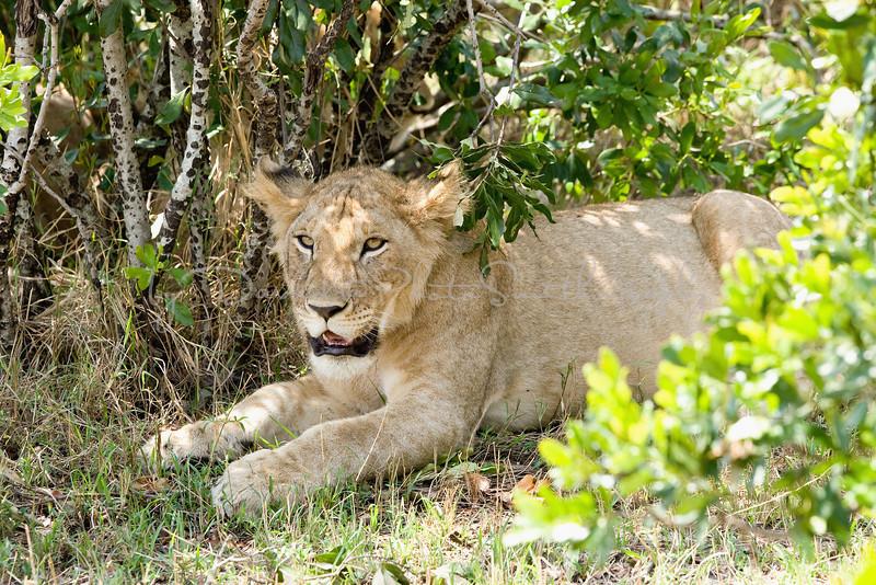 20100912_Maasi Mara_155