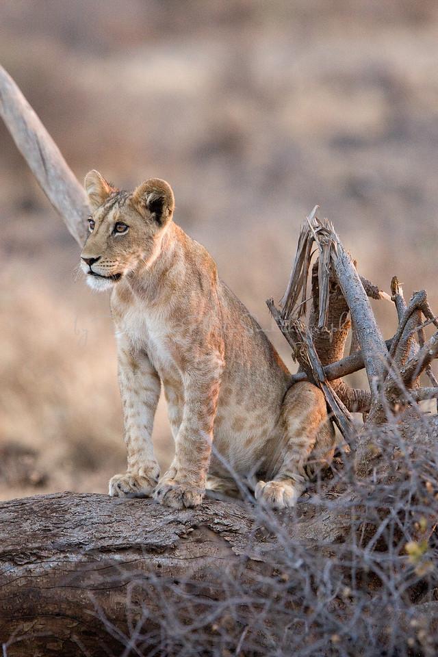 20100903_Samburu_044