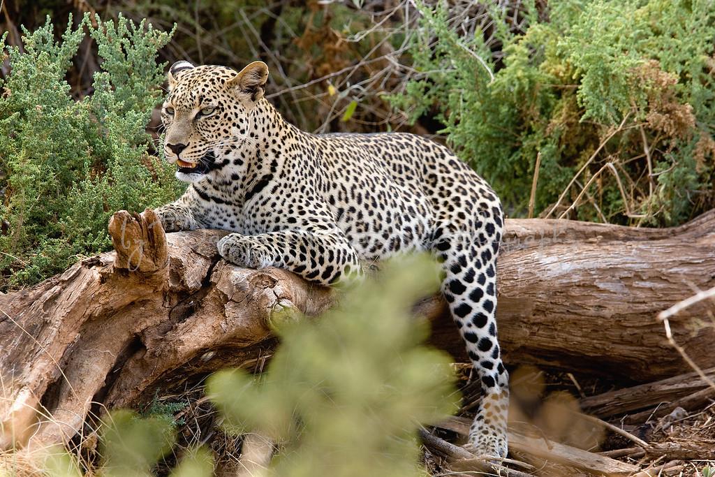 20100903_Samburu_0063