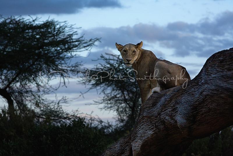 20100903_Samburu_0820