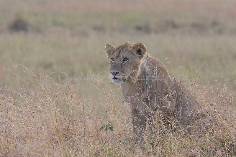 2007 07 24 Masai Mara 121
