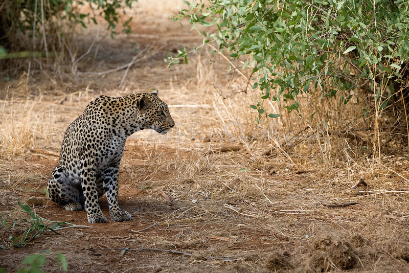 20100904_Samburu_290