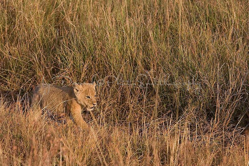 2007 07 24 Masai Mara 199