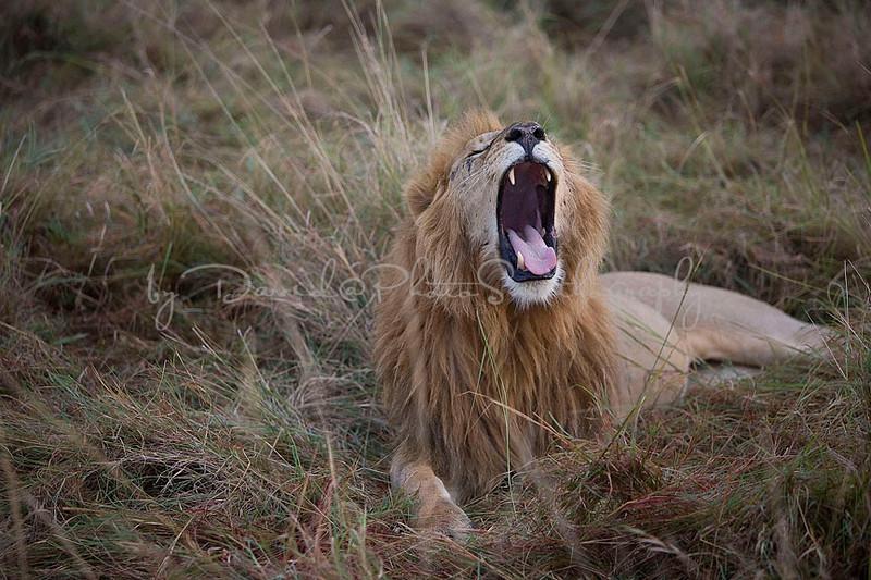 2007 07 25 Masai Mara 650