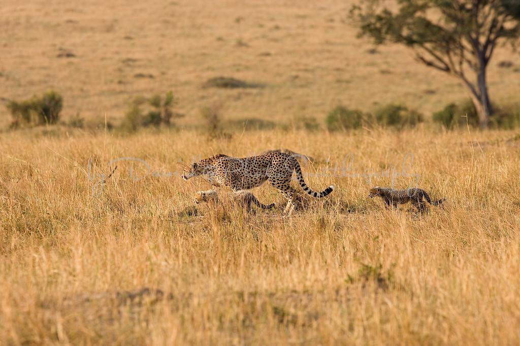 20100912_Maasi Mara_673