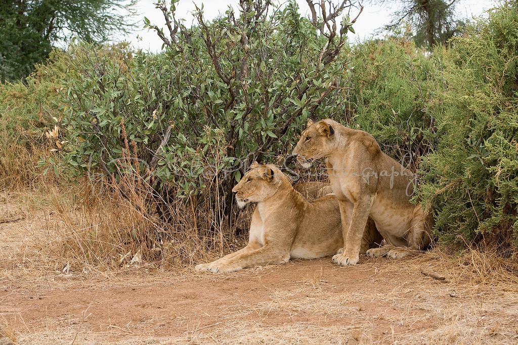 20100903_Samburu_0702
