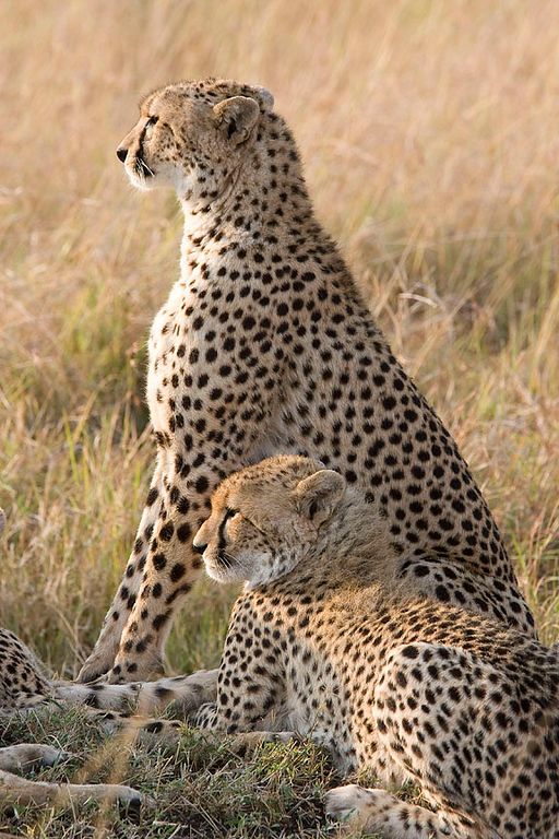 2007 07 26 Masai Mara 104