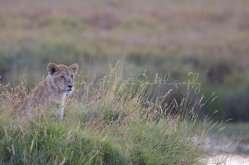 2007 07 24 Masai Mara 103