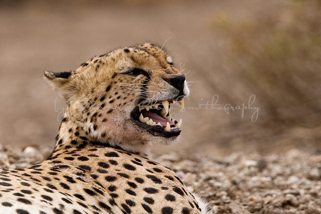 20100902_Samburu_0085