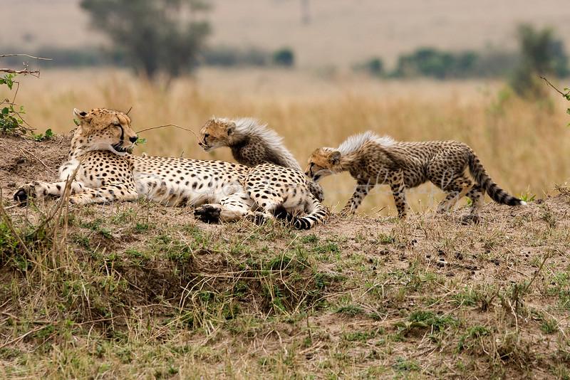 20100912_Maasi Mara_190