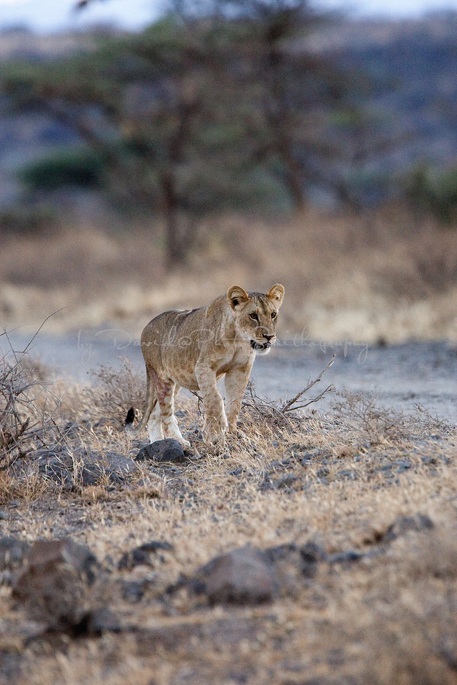 20100903_Samburu_010