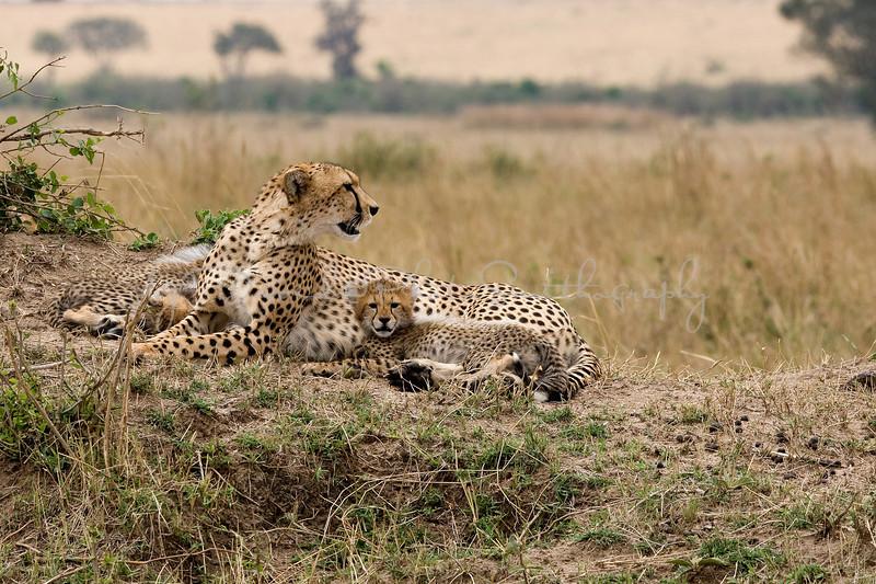 20100912_Maasi Mara_320