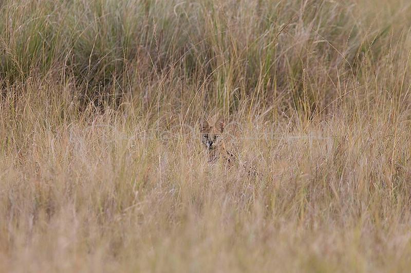 2007 07 25 Masai Mara 818