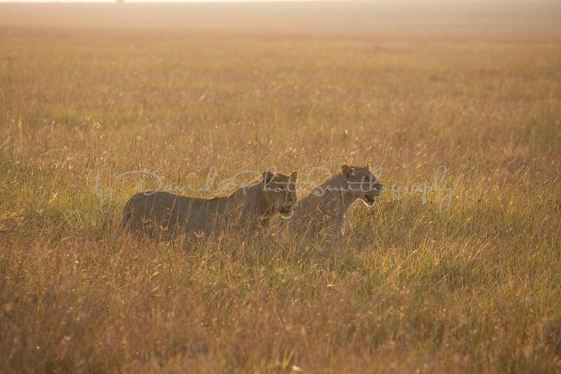 2007 07 24 Masai Mara 167