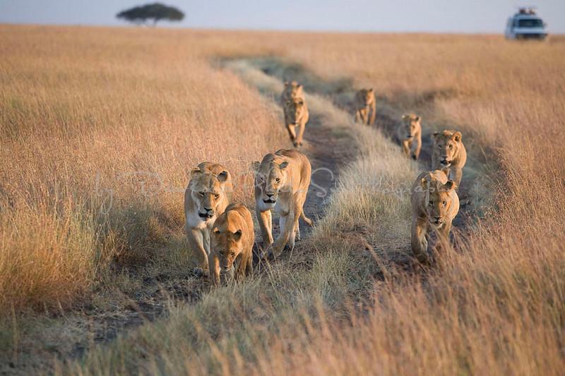 2007 07 24 Masai Mara 140