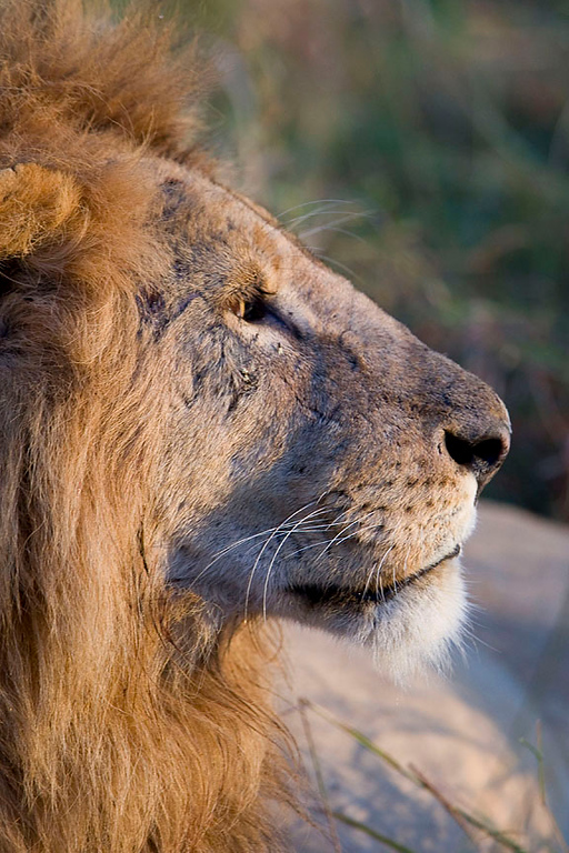 2007 07 25 Masai Mara 041