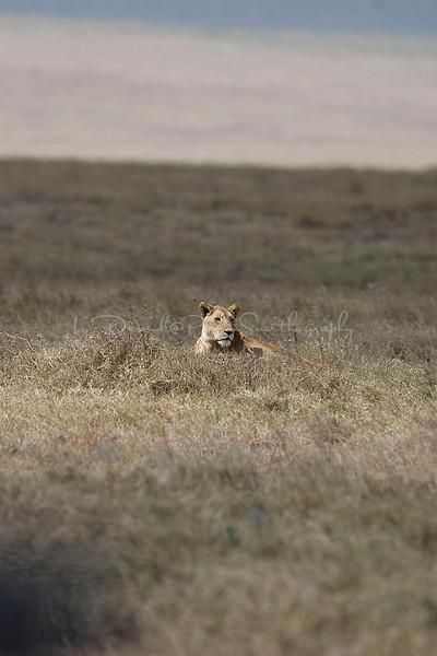 2007 07 18 Ngorongoro 404