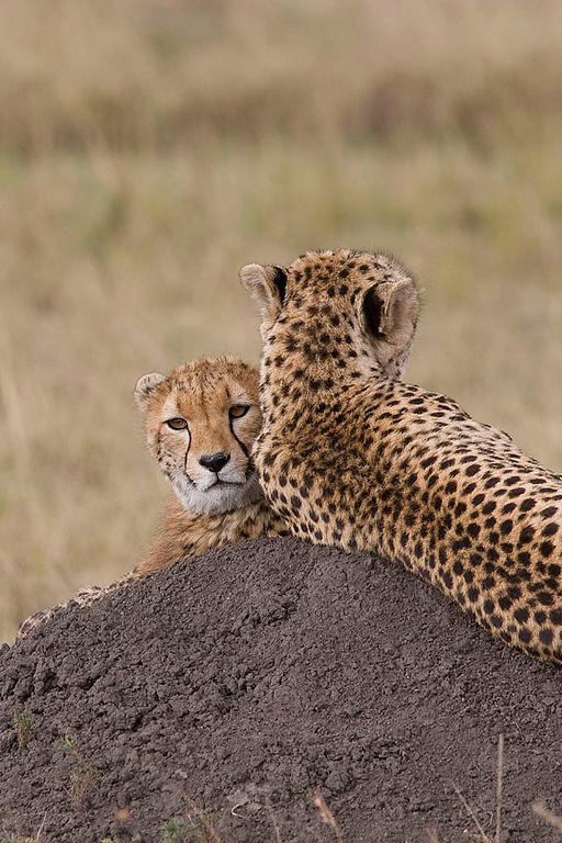 2007 07 25 Masai Mara 773