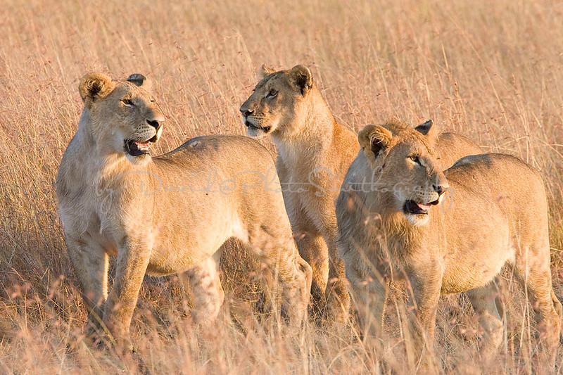 2007 07 24 Masai Mara 008