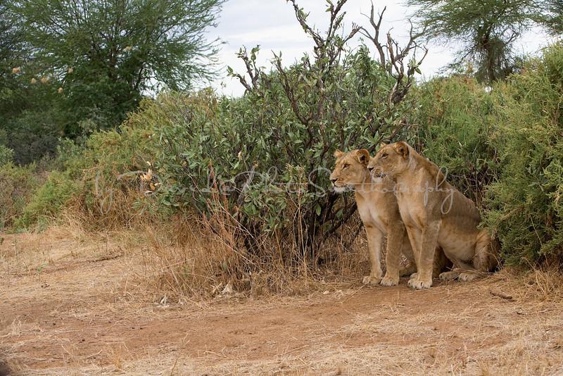 20100903_Samburu_0699