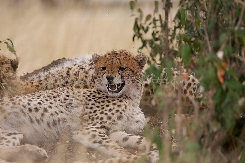 2007 07 25 Masai Mara 531
