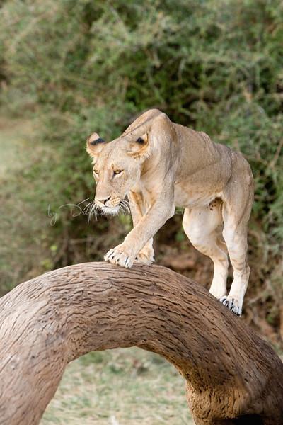 20100903_Samburu_0775