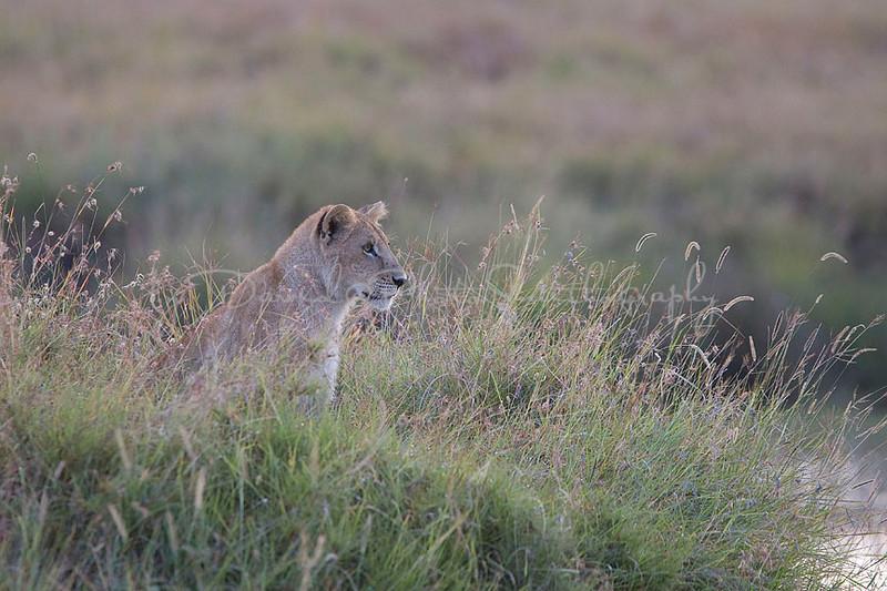 2007 07 24 Masai Mara 101