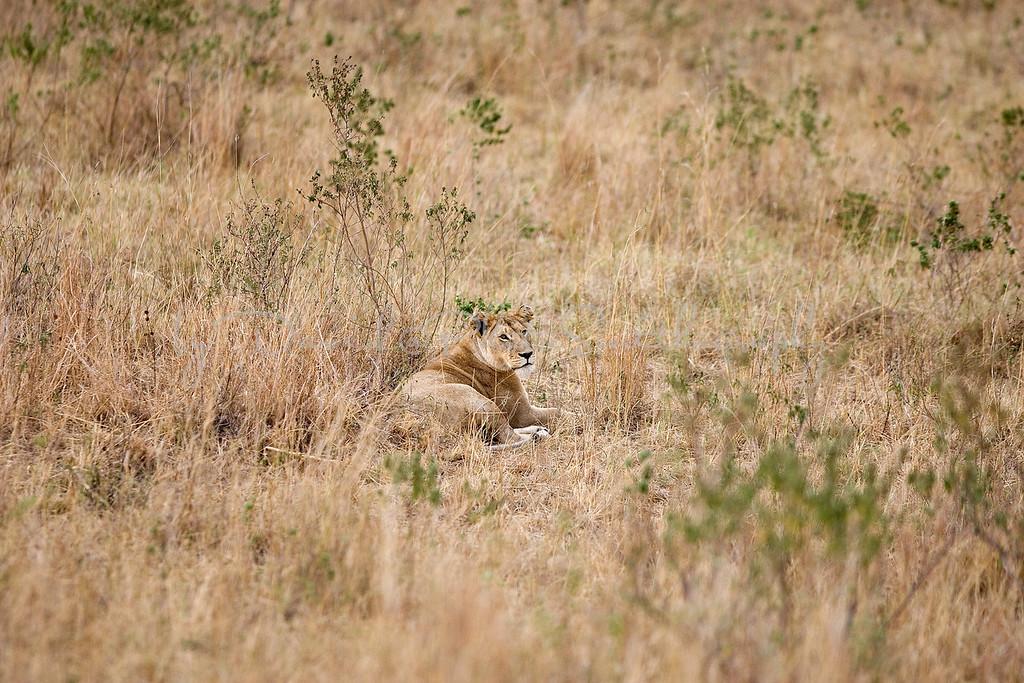 20100908_Maasi Mara_198